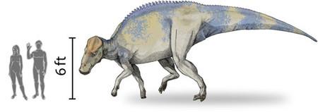 Brachylophosaurus Scale