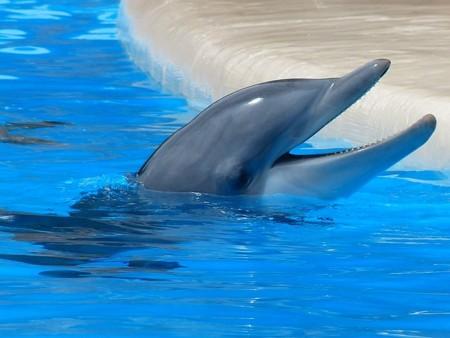 Bottlenose Dolphin 406763 640