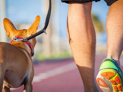 ¿Buscas motivación extra para entrenar? Hazlo con tu mascota