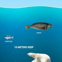 Sumérgete en los océanos con esta web de 'scroll' casi infinito que te descubre quiénes habitan las profundidades