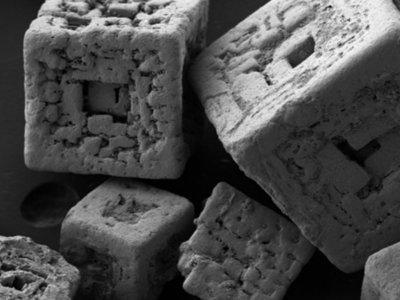 18 imágenes microscópicas que nos muestran el mundo desde una fascinante perspectiva