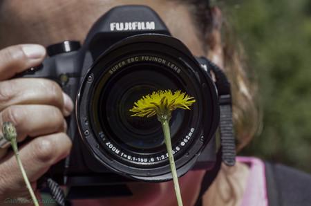 Trucos Mejores Fotos Flores 03