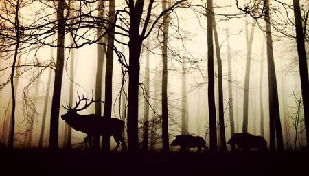 La causa del 28 % de la mortalidad de los vertebrados terrestres es humana