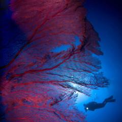 Foto 24 de 34 de la galería underwater-competition en Xataka Foto
