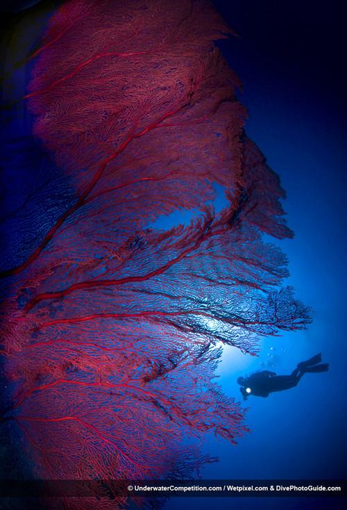 Foto de Underwater competition (24/34)