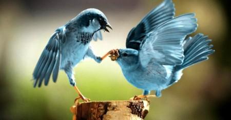 Twitter acepta recuperar Politwoops, el servicio que almacenaba tuits eliminados de políticos