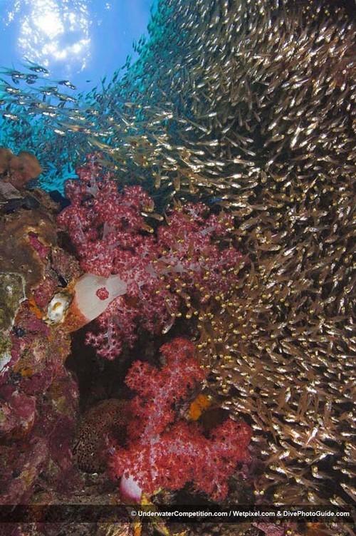 Foto de Underwater competition (11/34)