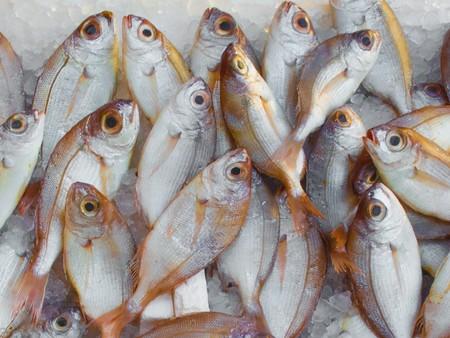 Catch Fish Fish Market 229789