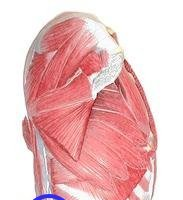 La importancia del apoyo lumbar en los ejercicios de musculación