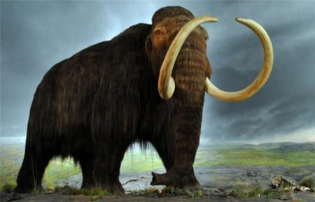 """Jurassic Park no era ficción: puede que pronto veamos mamuts """"clonados"""""""