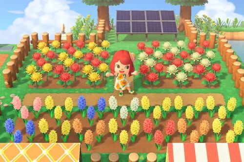 Cómo cultivar y criar flores híbridas en Animal Crossing: New Horizons, tu isla estará incompleta sin una pizca de color floral