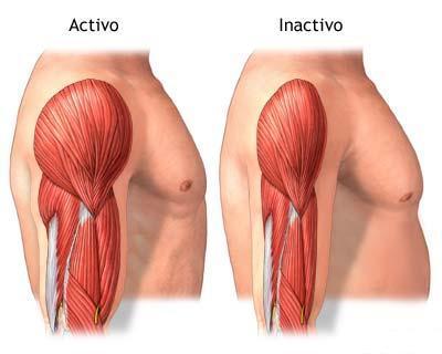 No hacer nada disminuye la masa muscular