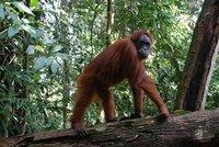 Indonesia: Naturaleza salvaje en la isla de Sumatra