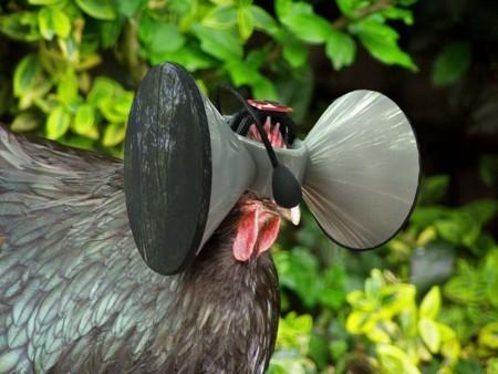 Una gallina con un casco de realidad virtual nos da una lección de tecnología