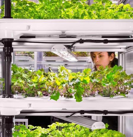 Ideas que revolucionan nuestra forma de hacer la compra: recoger la cosecha de verduras en el súper