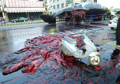 El día que en que una criatura de 50 toneladas explotó en el centro de una ciudad