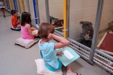 Algo bello está ocurriendo en este refugio de animales: los niños les leen a los perros abandonados