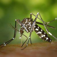 Guía científica básica para evitar que nos engañen con el enésimo repelente antimosquitos (que, por supuesto, tampoco funciona)