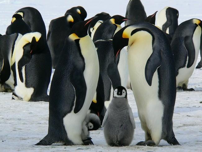 Penguins 429128 1280