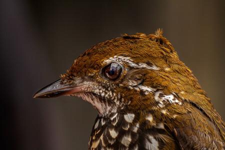 Aves 003