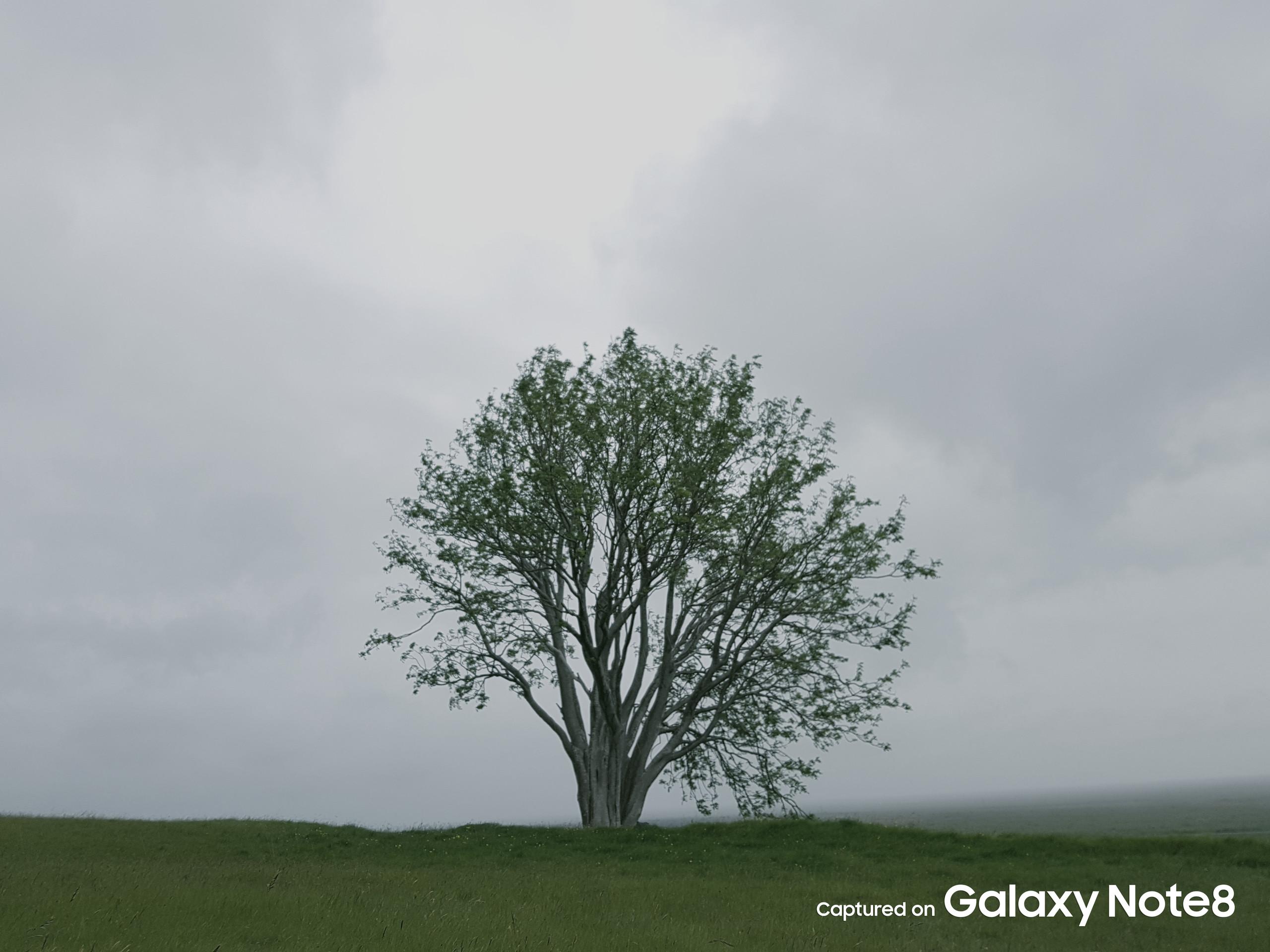 Foto de Galaxy Note 8 (12/37)