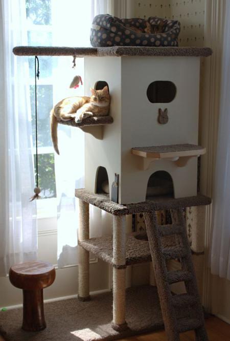 Gatos Rincon 7