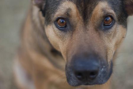 El vídeo que tienes que ver para no convertirte en un salvaje abandonando a tu perro