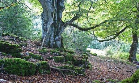 El Reino Unido venderá parte de sus bosques para 'atajar' su grave crisis fiscal