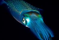 Ver 'dar a luz' a un calamar gigante es el más grande espectáculo de la naturaleza