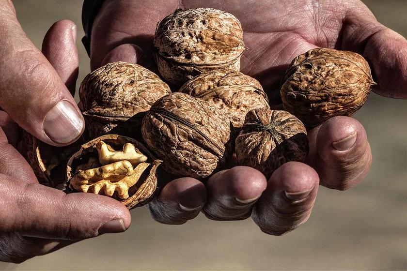 Se buscan jóvenes agricultores para nogales centenarios