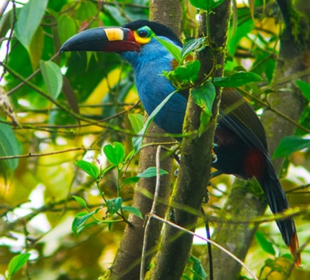 Avistamiento de aves en Quito