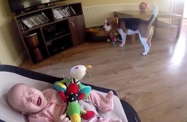 Increíble reacción de un perro después de haberle robado un juguete a un bebé