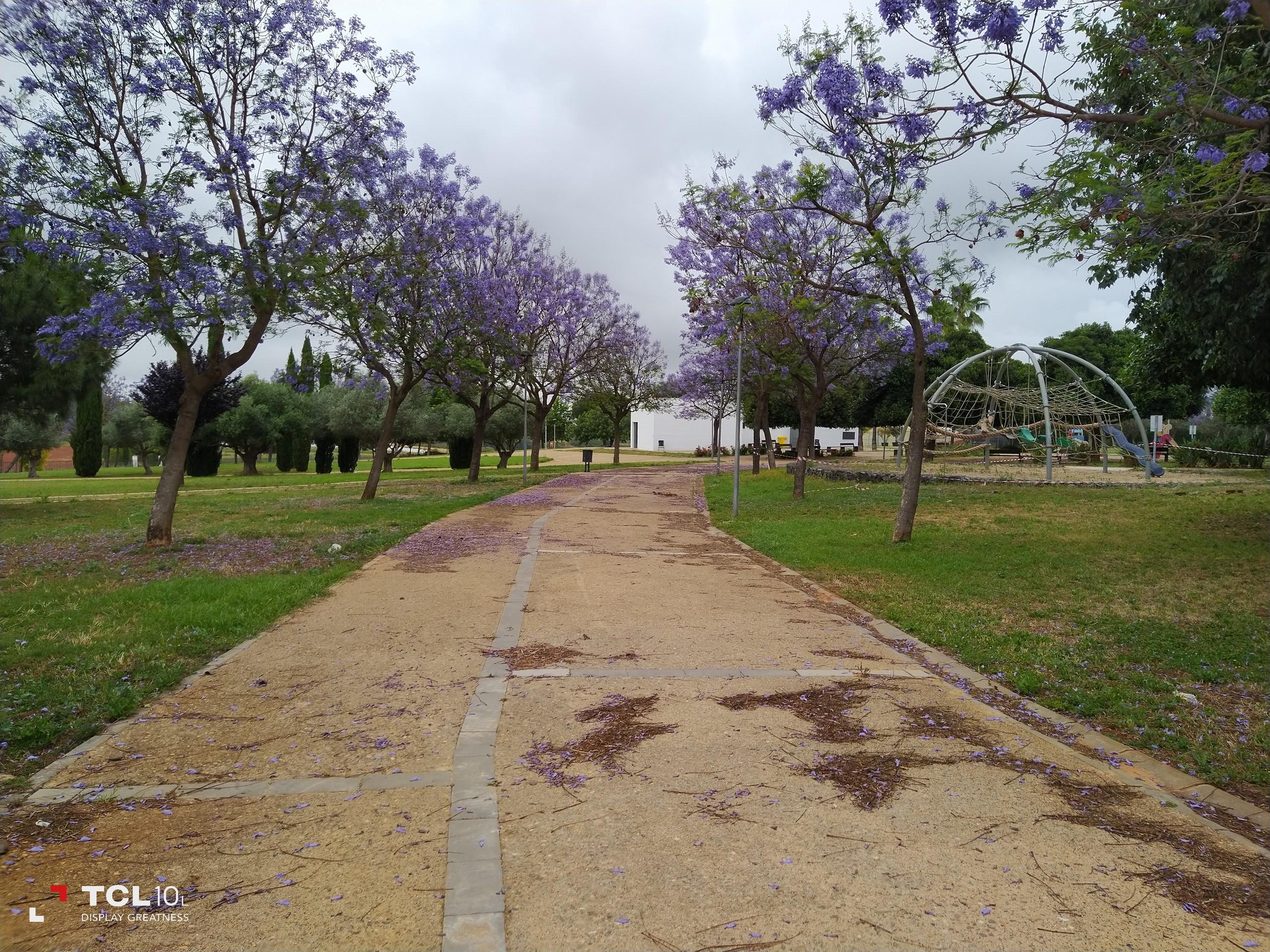 Foto de Más fotografías con el TCL 10L (11/20)