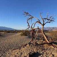 El Valle de la Muerte lo es cada vez más: se ha registrado la temperatura más alta de 2020 y ya van varios récords históricos