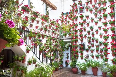 Flores y color en la fiesta de los Patios de Córdoba 2018
