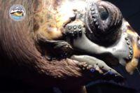 Esta tortuga volverá a tener una vida normal gracias a una mandíbula impresa en 3D