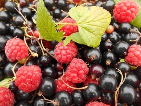 Top cinco de frutas frescas ricas en fibra