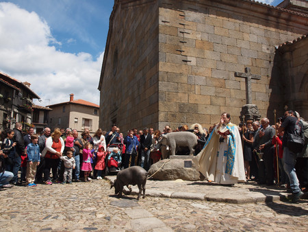 Cerdo San Anton Alberca