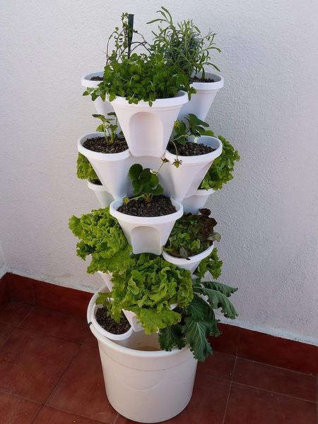 A Base De Algas Para Cultivo Bioponico
