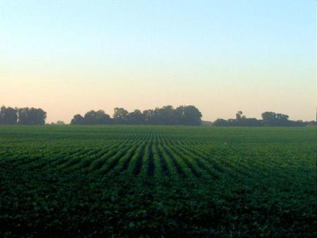 ¿Hemos alcanzado los límites de la agricultura?