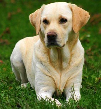 Singularidades extraordinarias de animales ordinarios (XXXIX): el perro