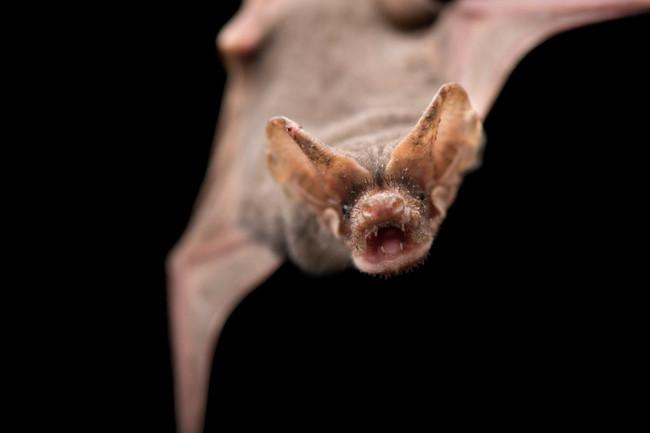 El animal que vuela más rápido del mundo no es el que crees