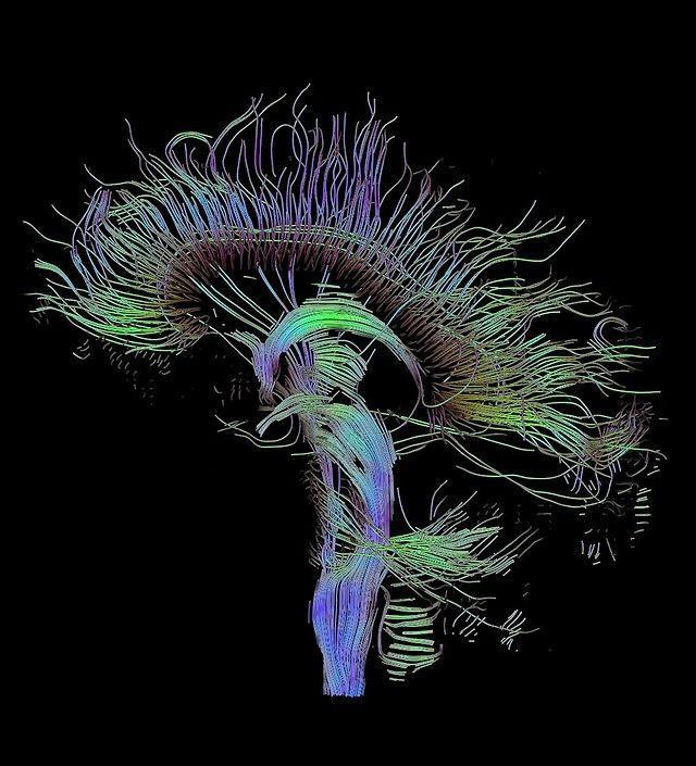 ¿Las drogas estuvieron implicadas en el desarrollo evolutivo de la humanidad?