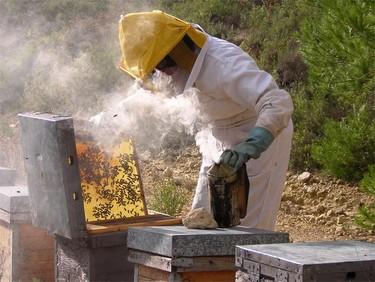 La apicultura y las abejas podrían ser patrimonio de la humanidad