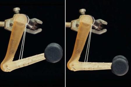 Contempla como este músculo artifical es capaz de levantar 1000 veces su propio peso