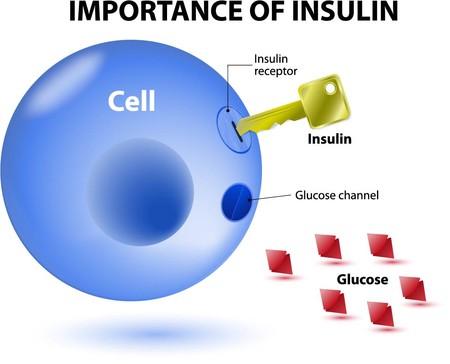 Una dieta que imite el ayuno puede ser clave en la regeneración de células productoras de insulina en diabéticos tipo 1