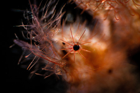 Supermacro Ludovic Galko Rundgren Eye Got