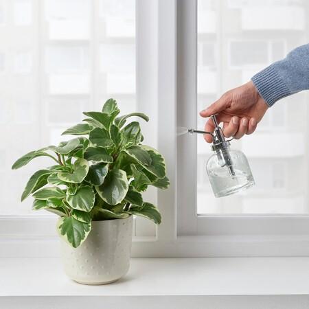 Rociador de plantas