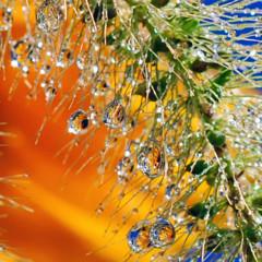 Foto 16 de 25 de la galería la-belleza-de-una-gota-de-agua en Xataka Foto