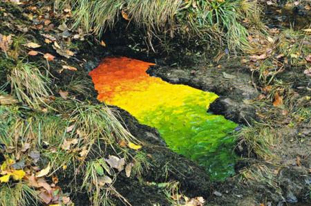 Gradiente de color creado con hojas